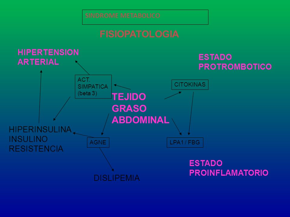 FISIOPATOLOGIA TEJIDO GRASO ABDOMINAL HIPERTENSION ARTERIAL ESTADO