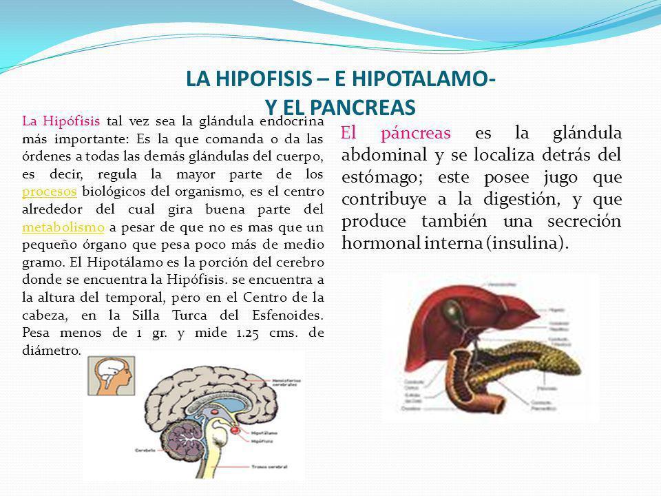 LA HIPOFISIS – E HIPOTALAMO- Y EL PANCREAS