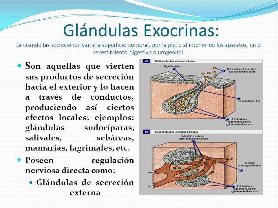 Glándulas Exocrinas: Es cuando las secreciones van a la superficie corporal, por la piel o al interior de los aparatos, en el revestimiento digestivo o urogenital.