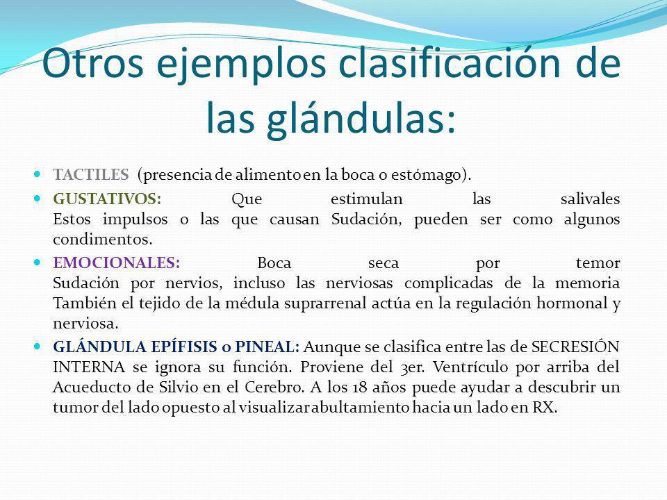 Otros ejemplos clasificación de las glándulas: