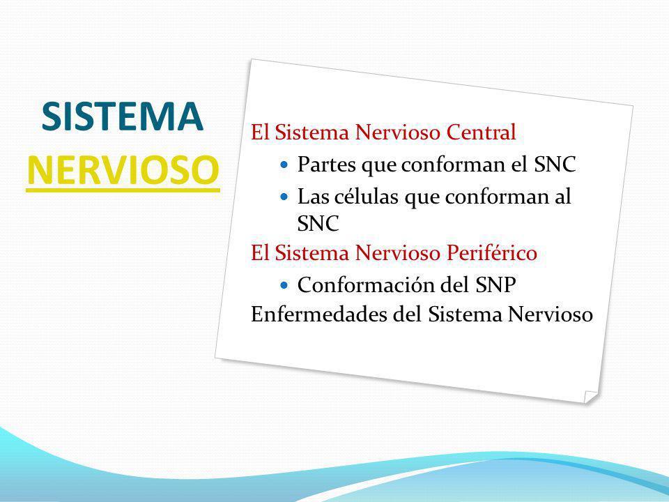 SISTEMA NERVIOSO El Sistema Nervioso Central