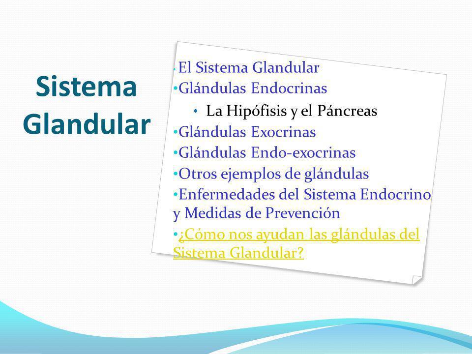 Sistema Glandular Glándulas Endocrinas La Hipófisis y el Páncreas