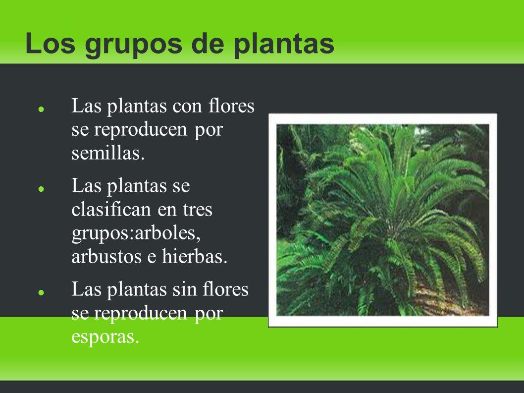 Las plantas las plantas la nutrici n de las plantas for Como se llaman las plantas ornamentales