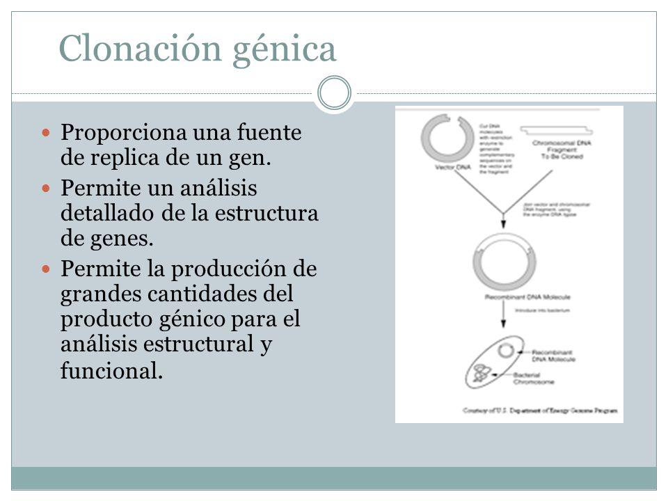 Clonación génica Proporciona una fuente de replica de un gen.