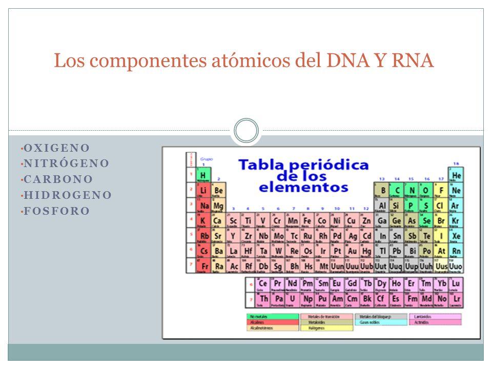 Los componentes atómicos del DNA Y RNA