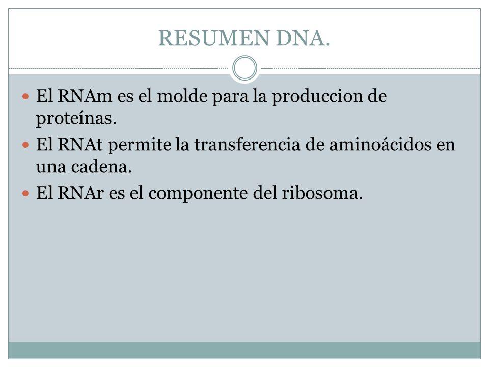 RESUMEN DNA. El RNAm es el molde para la produccion de proteínas.