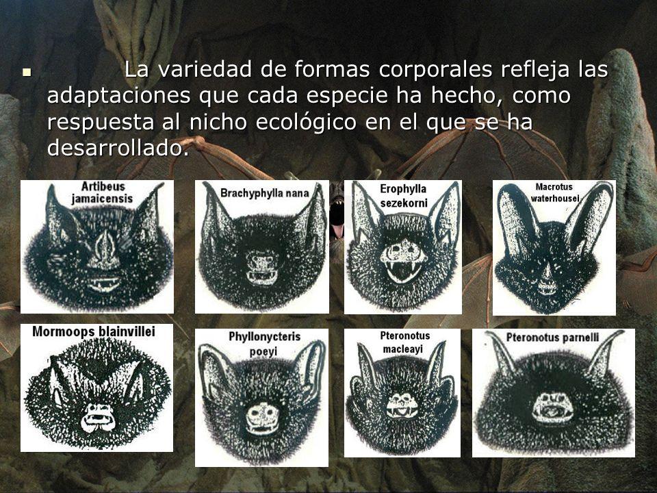 La variedad de formas corporales refleja las adaptaciones que cada especie ha hecho, como respuesta al nicho ecológico en el que se ha desarrollado.