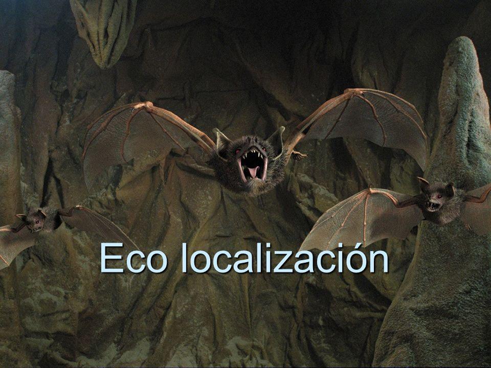Eco localización