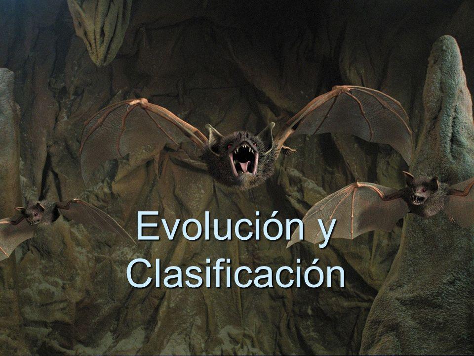 Evolución y Clasificación