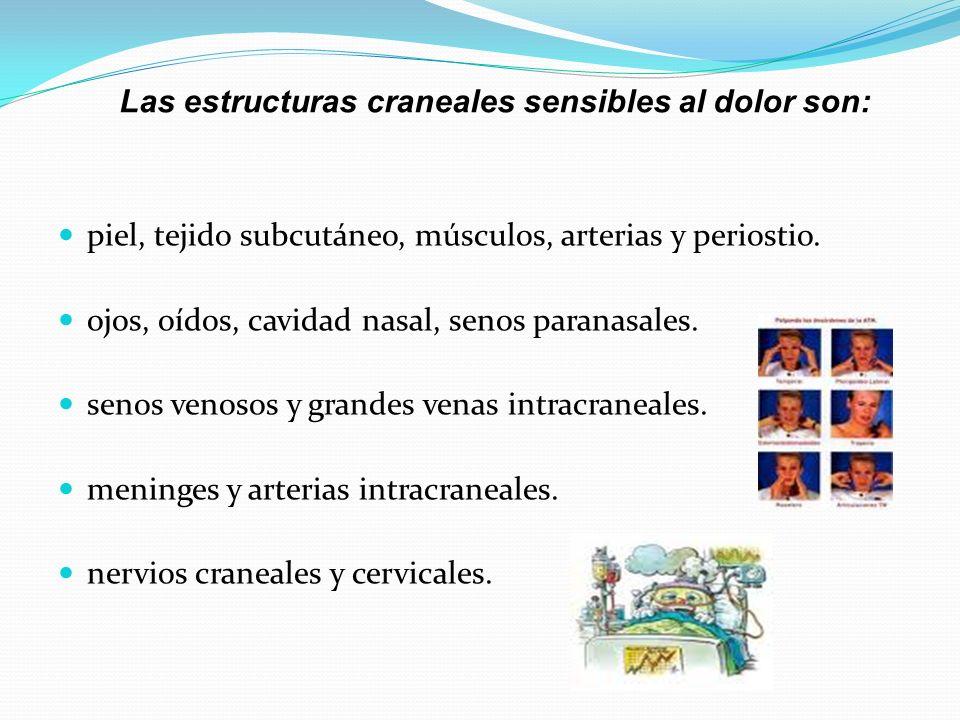 Las estructuras craneales sensibles al dolor son: