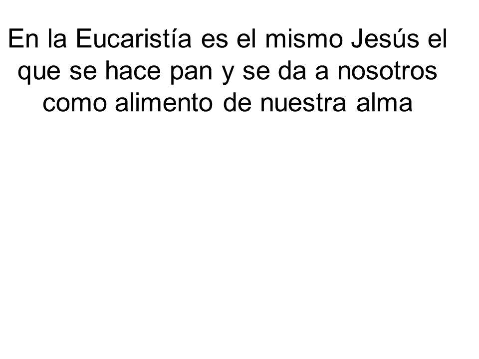 En la Eucaristía es el mismo Jesús el que se hace pan y se da a nosotros como alimento de nuestra alma