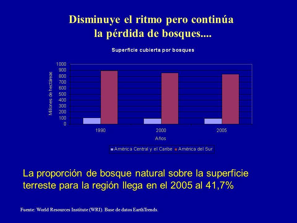 Disminuye el ritmo pero continúa la pérdida de bosques....