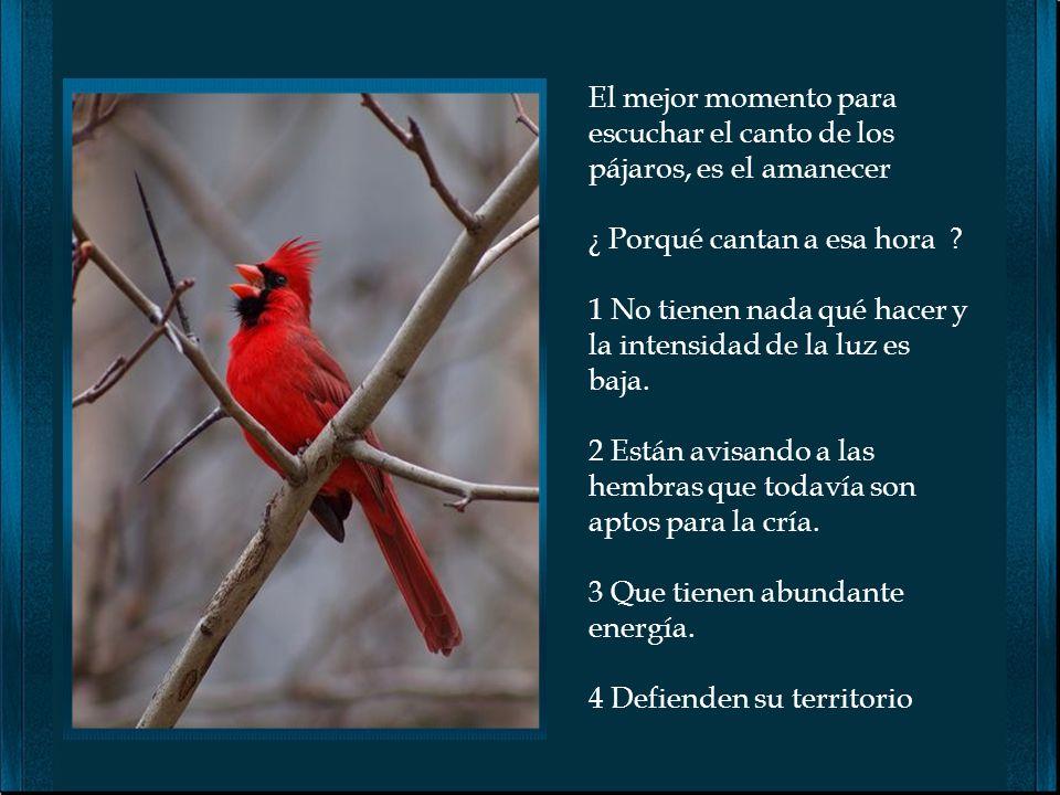 El mejor momento para escuchar el canto de los pájaros, es el amanecer