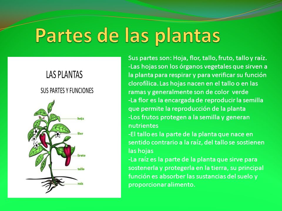 Las partes de las plantas ppt descargar - Cuales son las plantas con flores ...