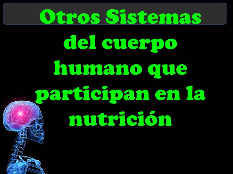 Otros Sistemas del cuerpo humano que participan en la nutrición