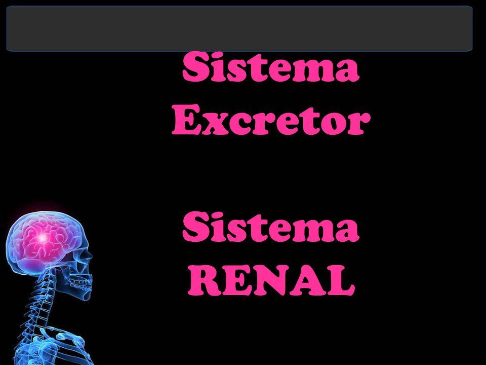 Sistema Excretor Sistema RENAL