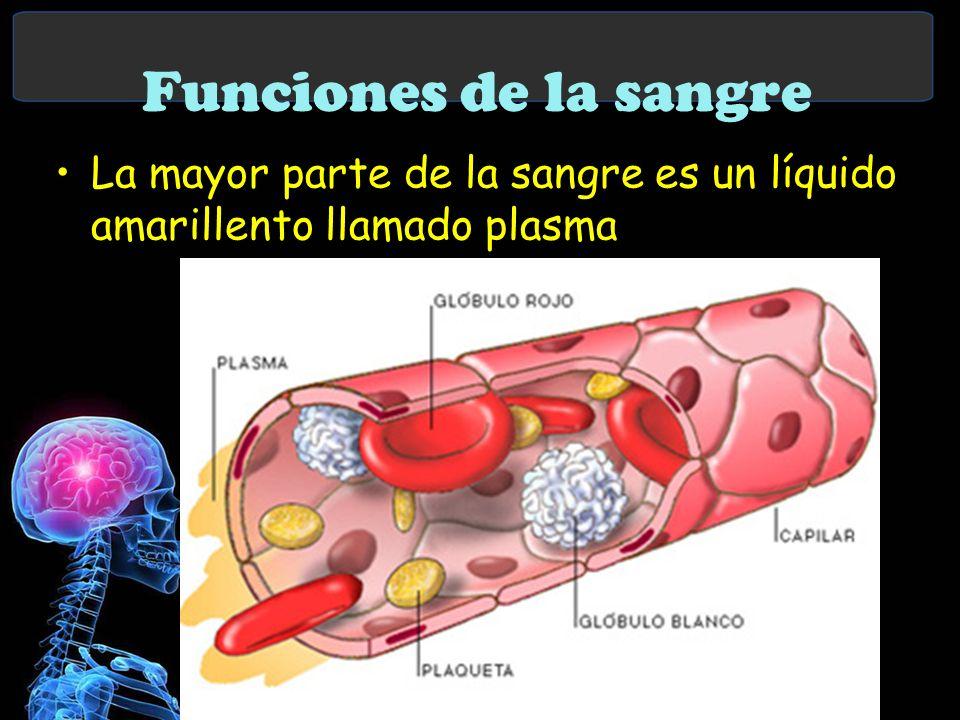 Funciones de la sangre La mayor parte de la sangre es un líquido amarillento llamado plasma
