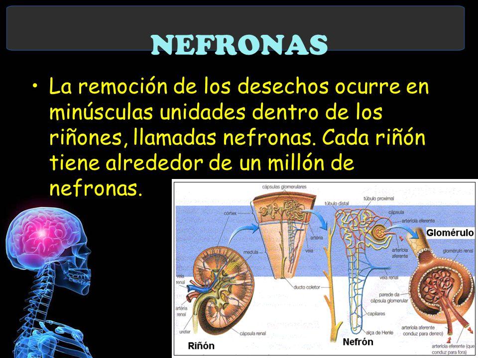 NEFRONAS