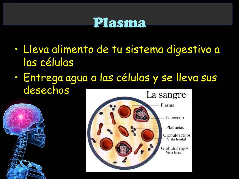 Plasma Lleva alimento de tu sistema digestivo a las células