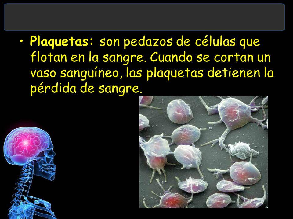 Plaquetas: son pedazos de células que flotan en la sangre