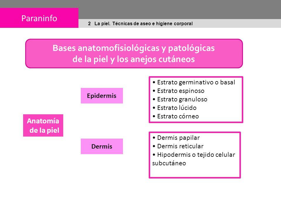 Bases anatomofisiológicas y patológicas