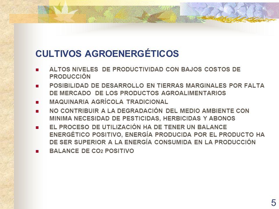 CULTIVOS AGROENERGÉTICOS