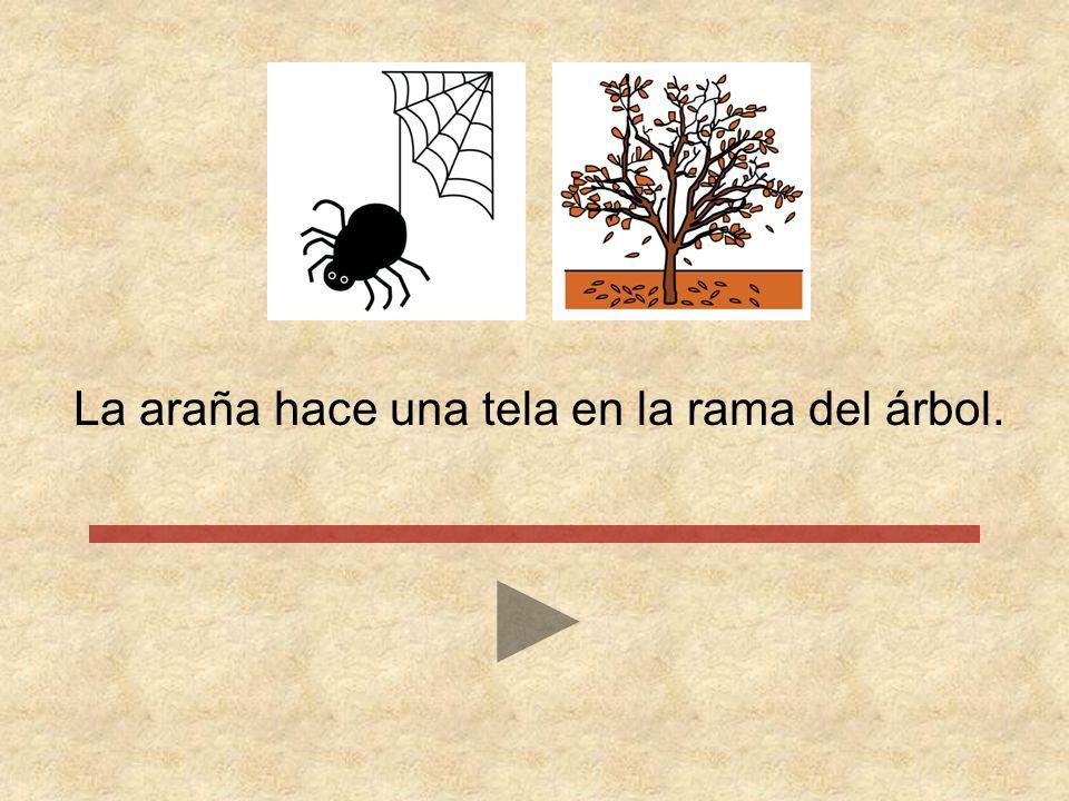 La araña hace una tela en la rama del árbol.