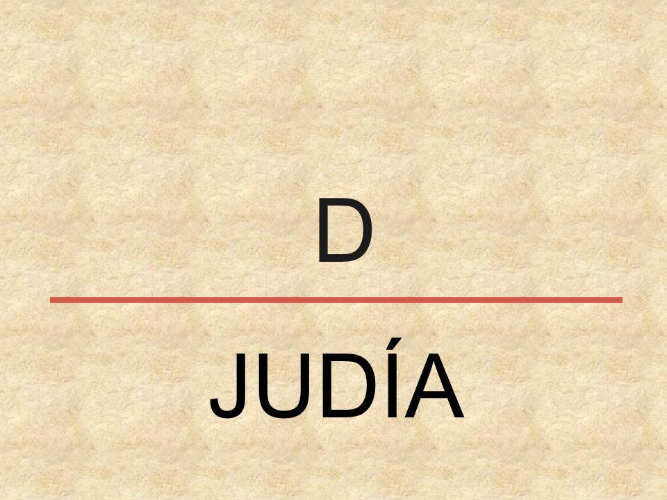 D JUDÍA
