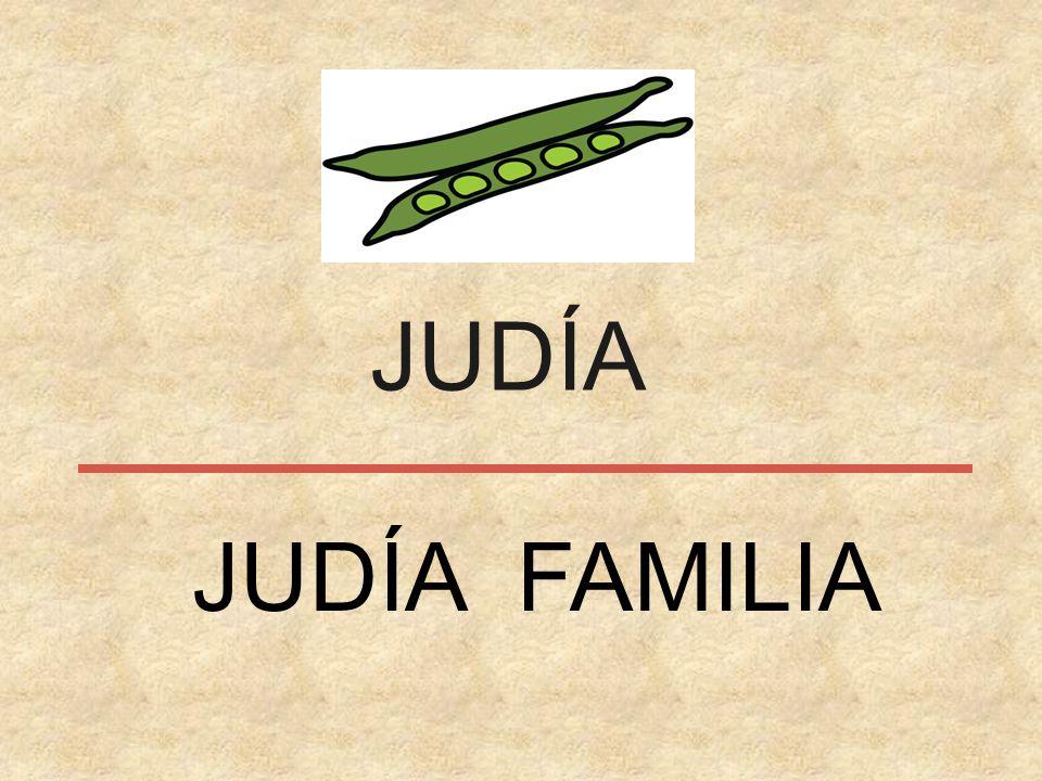 JUDÍA JUDÍA FAMILIA