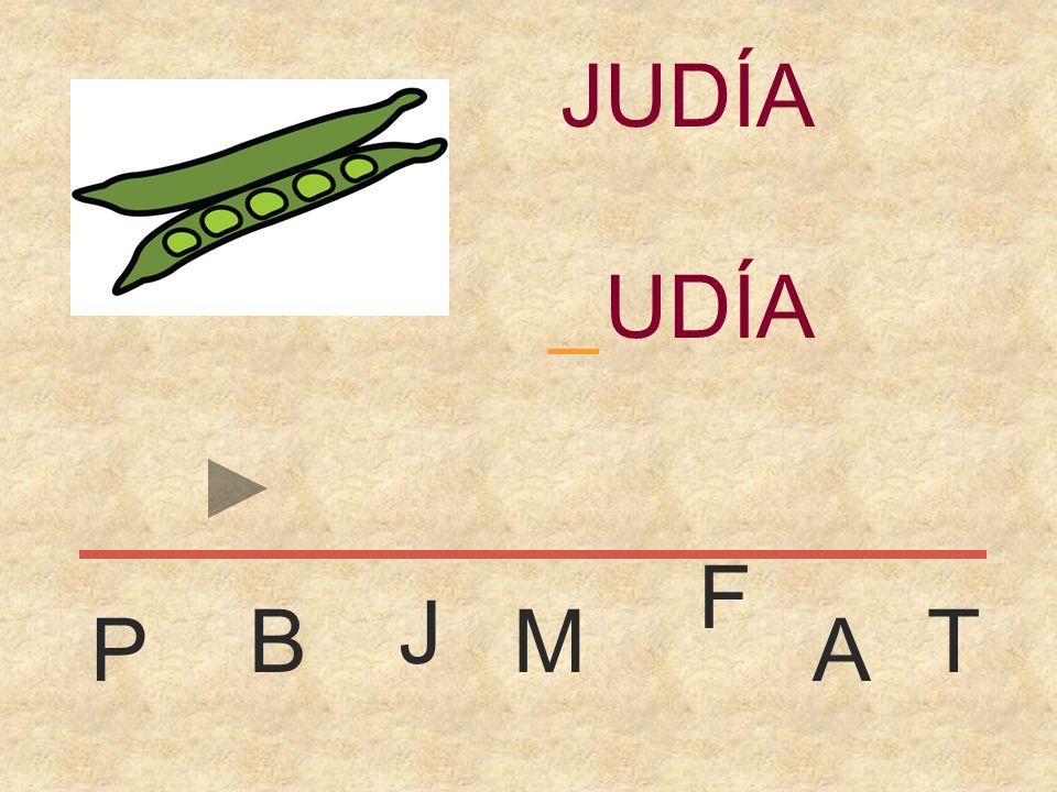 JUDÍA _ JUDÍA F J B M T P A