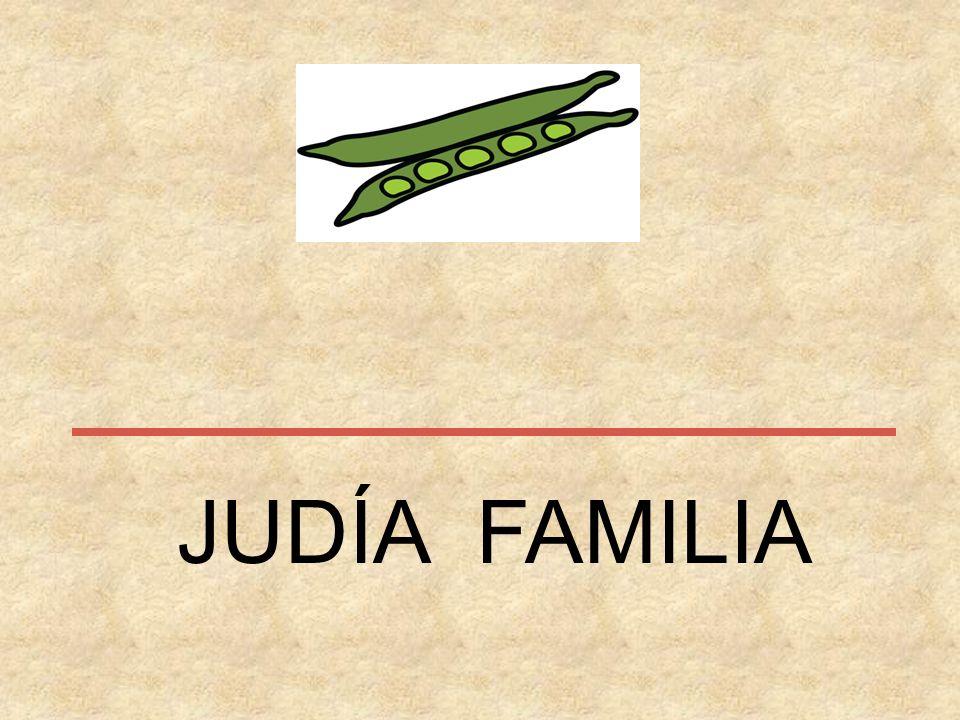 JUDÍA FAMILIA