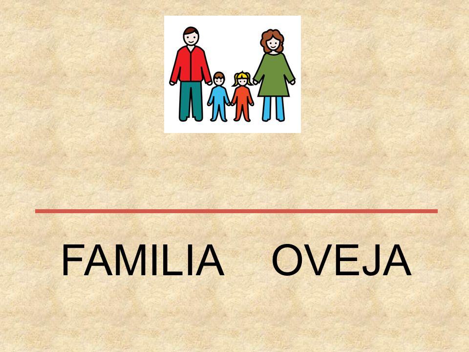 FAMILIA OVEJA