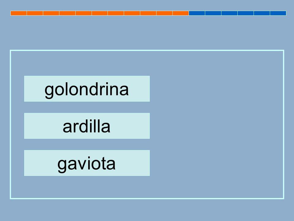 golondrina ardilla gaviota