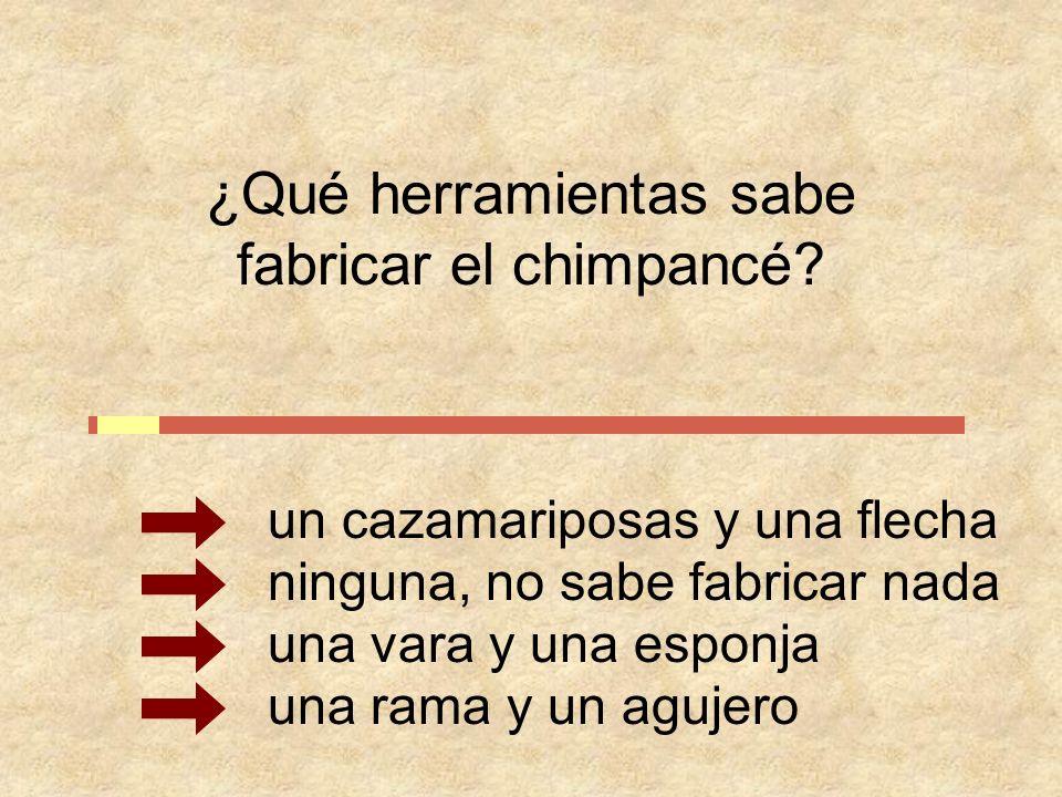 ¿Qué herramientas sabe fabricar el chimpancé