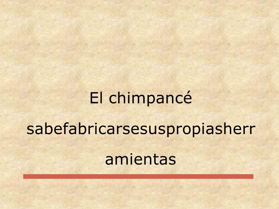 El chimpancé sabefabricarsesuspropiasherramientas