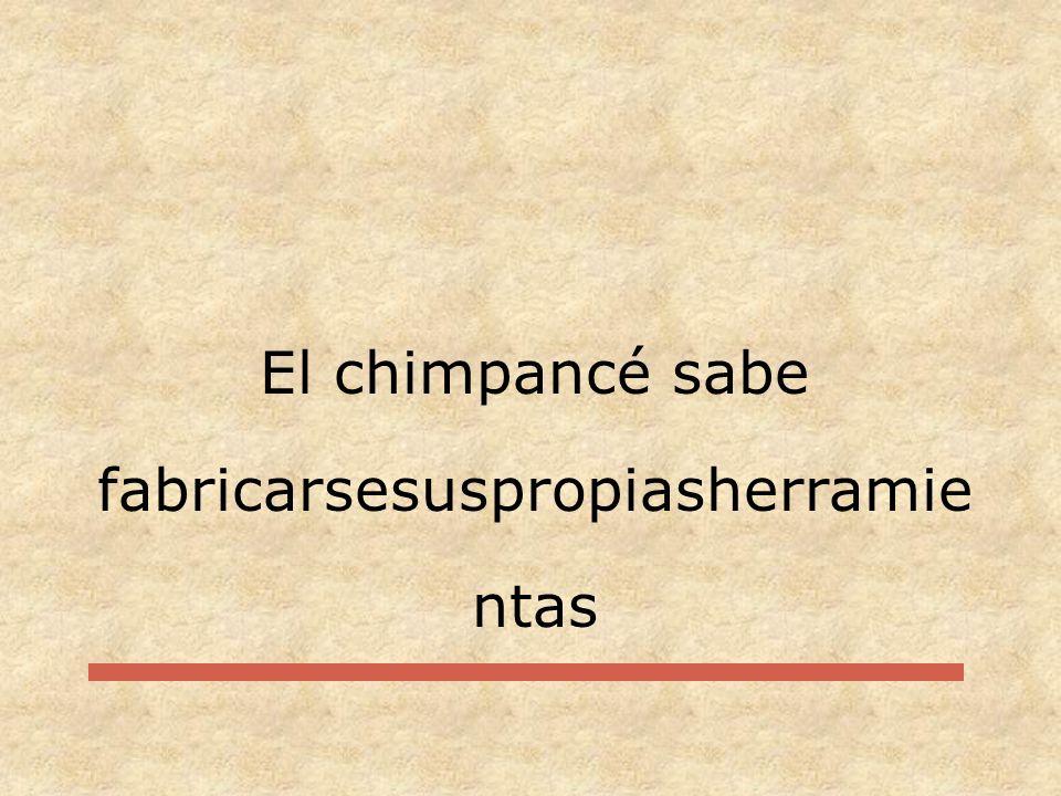 El chimpancé sabe fabricarsesuspropiasherramientas