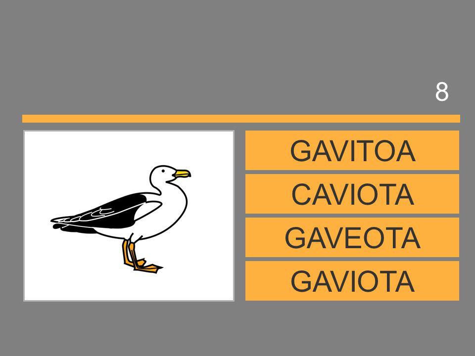 8 GAVITOA CAVIOTA GAVEOTA GAVIOTA