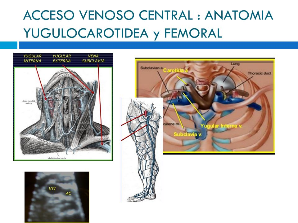 Contemporáneo Línea Central De La Anatomía Colocación Adorno ...