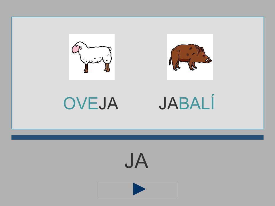 OVEJA JABALÍ JA