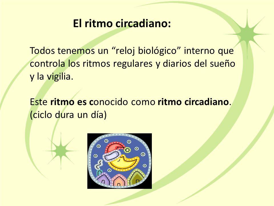 El ritmo circadiano: Todos tenemos un reloj biológico interno que controla los ritmos regulares y diarios del sueño y la vigilia.