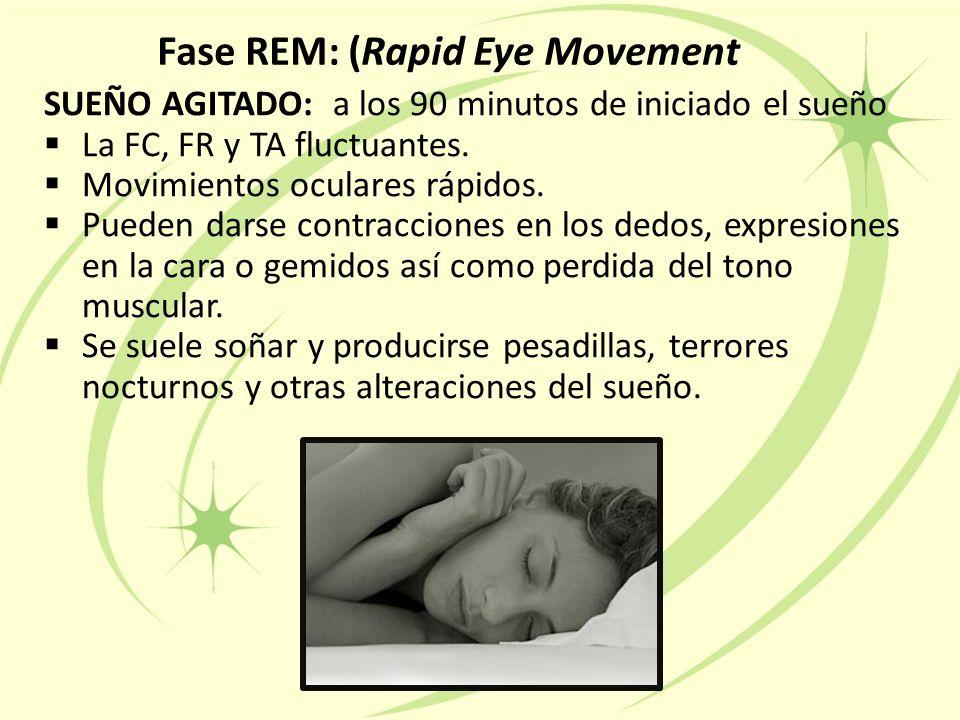 Fase REM: (Rapid Eye Movement