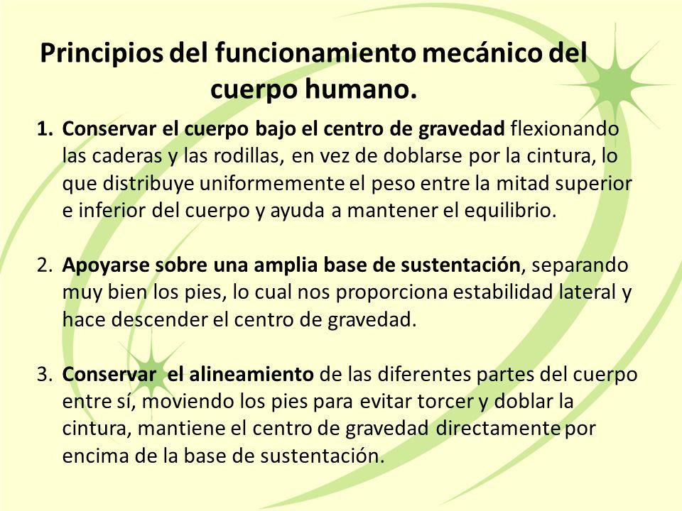 Principios del funcionamiento mecánico del cuerpo humano.