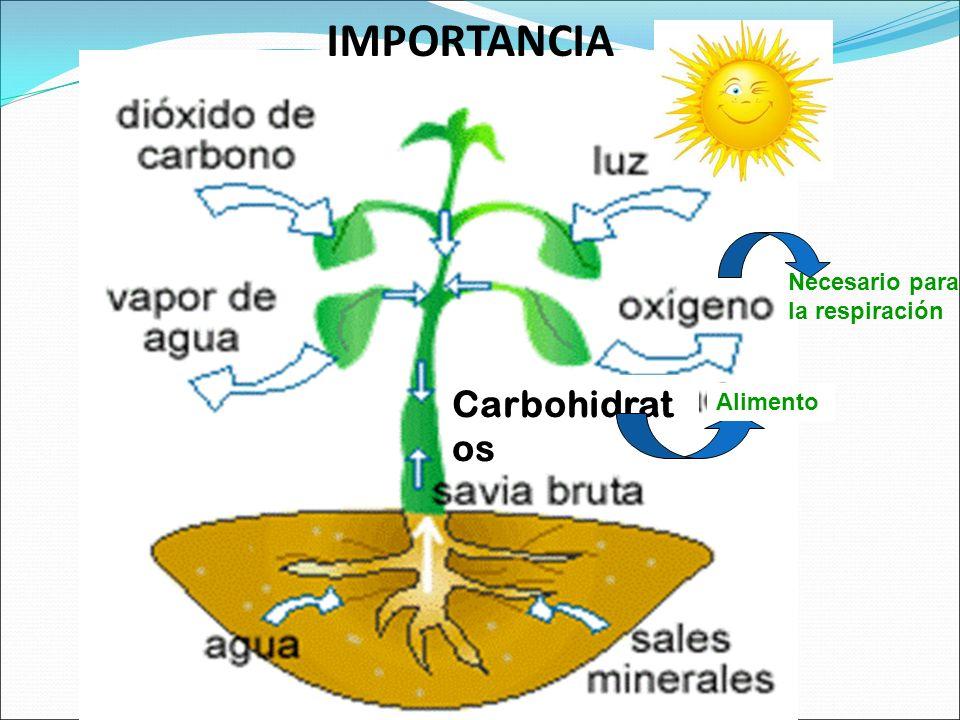 Respiracion De Las Plantas Gif: OBJETIVOS Determinar Los Factores Limitantes De La