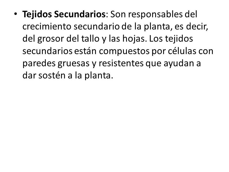 Plantas ppt video online descargar for Tejidos y novedades paredes