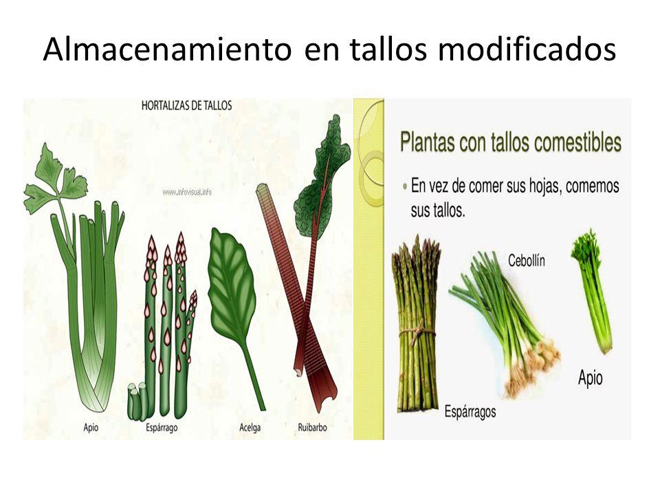 Plantas ppt video online descargar for Plantas hortalizas ejemplos