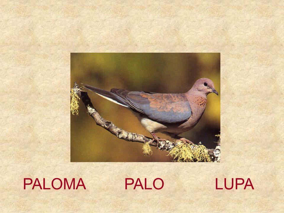 PALOMA PALO LUPA