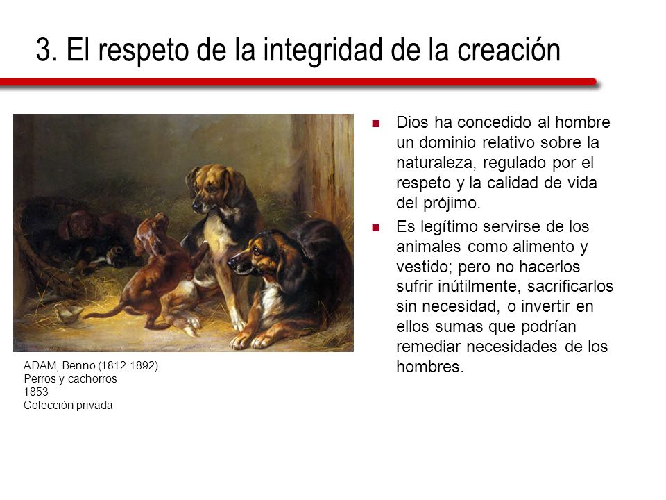 3. El respeto de la integridad de la creación