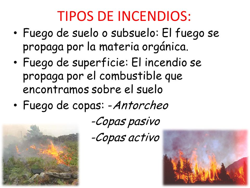 Incendios forestales claudia l pez 3 eso a n ppt descargar for Tipos de plantas forestales
