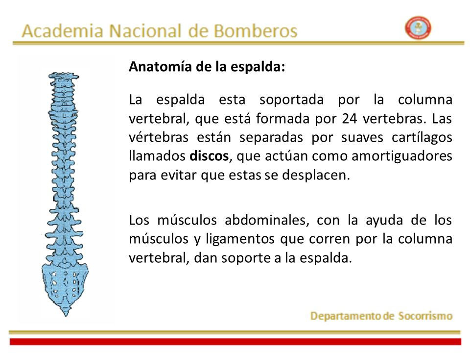 Anatomía de la espalda: