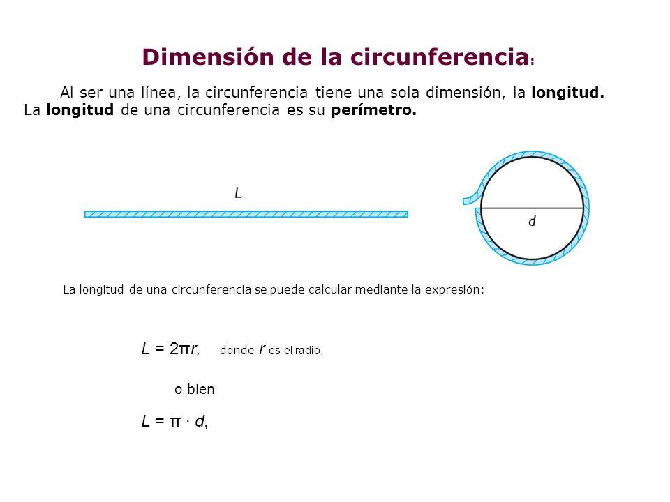 Dimensión de la circunferencia: